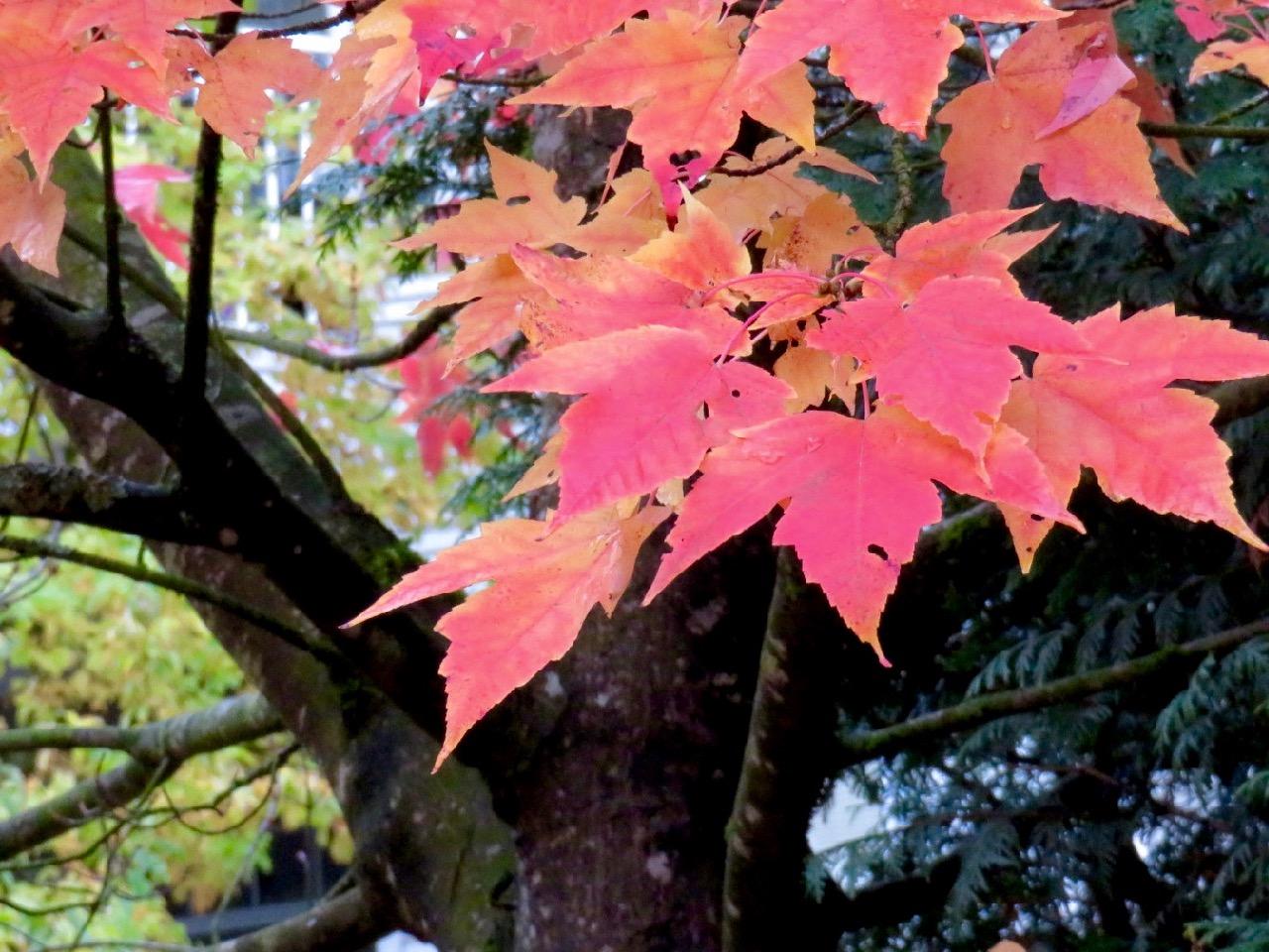 FVPS Autumn